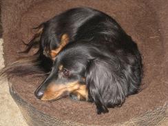 Baxter Ears 003