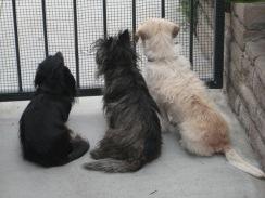 Beware!!! Guard Dogs!!