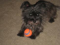 Bonnie's New Ball